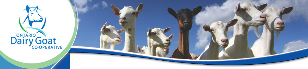 Image of goats and logo for Ontario Dairy Goat